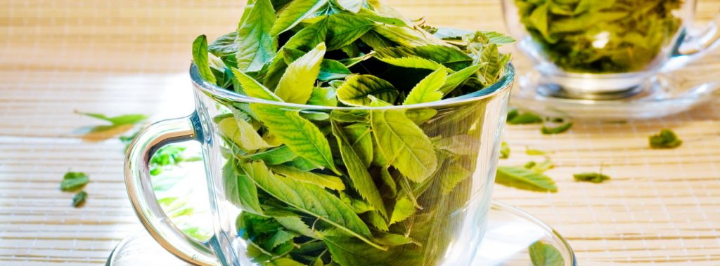 zielona herbata, zdrowie